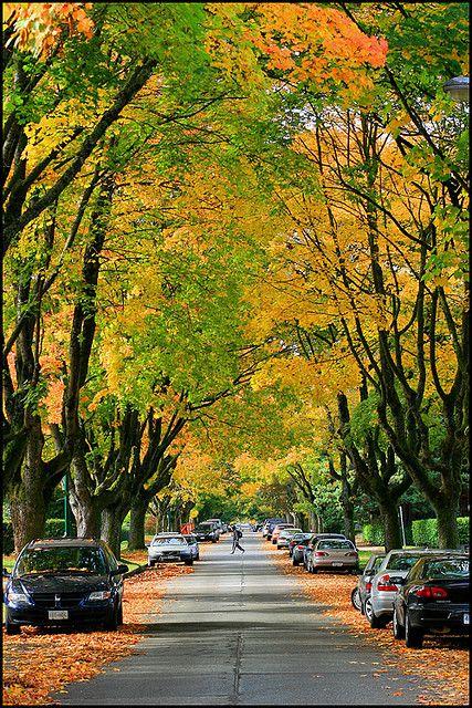 autumn in kitsilano by aloalo*. i love this street in the fall!