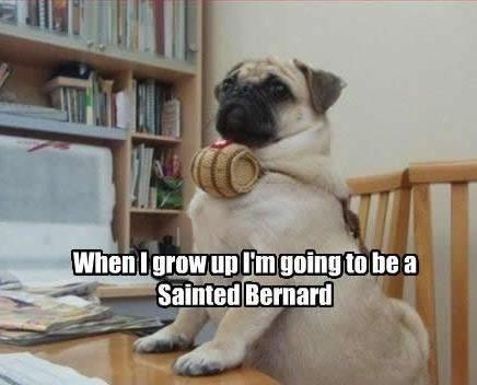 S T Bernards Dogs Poop