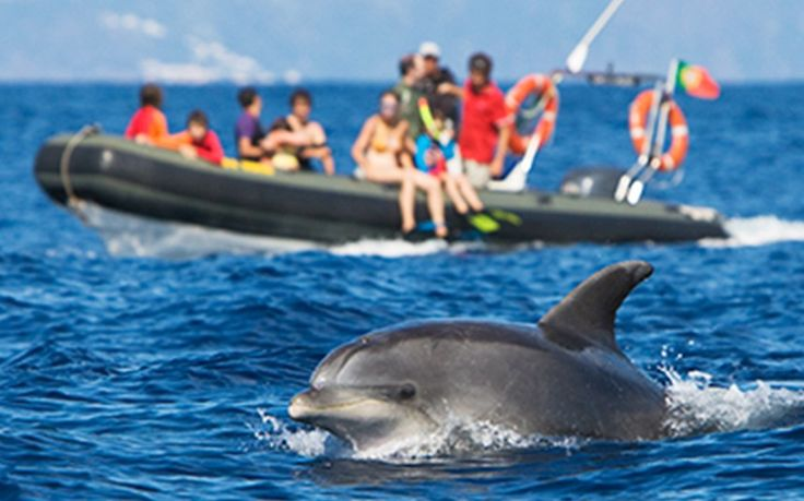 An activity-packed adventure - Telegraph An activity-packed adventure With an impressive array of activities, including whale watching, fishing and swimming with dolphins, the Azores promises an unforgettable holiday - Portugal