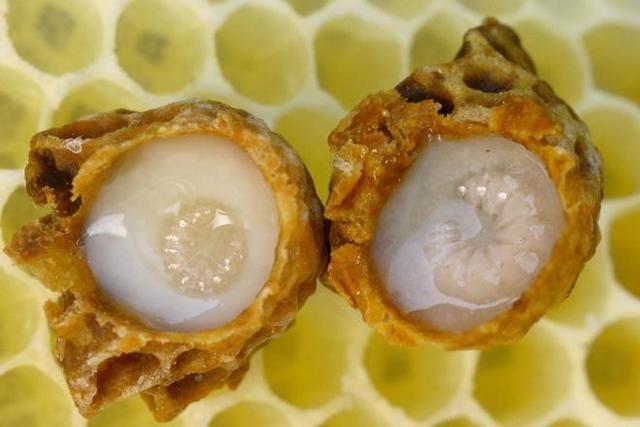Királynő eledele, a méhpempő a cukorbetegség és az Alzheimer megelőzésére