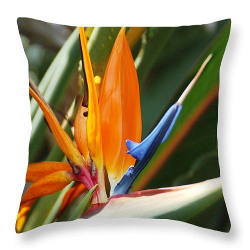 """Bird Of Paradise Throw Pillow for Sale by Aimee L Maher Photography and Art Visit ALMGallerydotcom. Our throw pillows are made from 100% spun polyester poplin fabric and add a stylish statement to any room. Pillows are available in sizes from 14""""x14"""" up to 26""""x26"""". Each pillow is printed on both sides (same image) and includes a concealed zipper and removable insert (if selected) for easy cleaning. Ships within 2-3 business days"""
