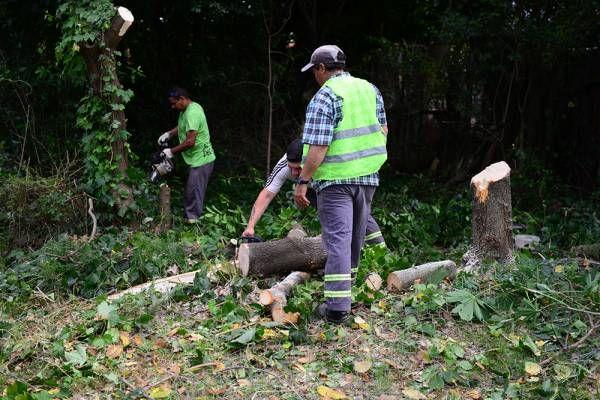 San Fernando hizo un trabajo de forestación y mantenimiento en vías del Tren Mitre