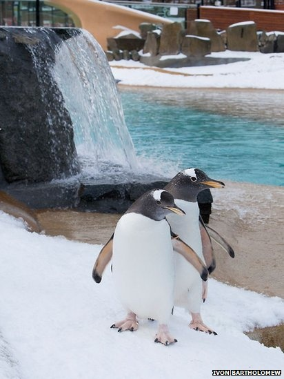 These two penguins look like they're dancing!