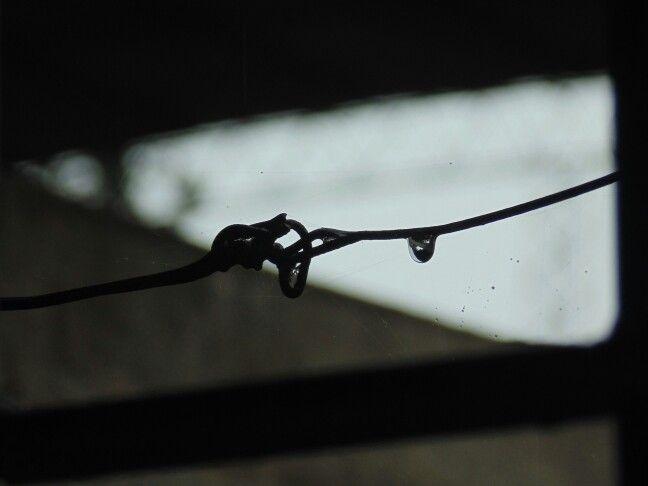 Gota. Dia de lluvia.  Estos dias me encanta estar en la ventana
