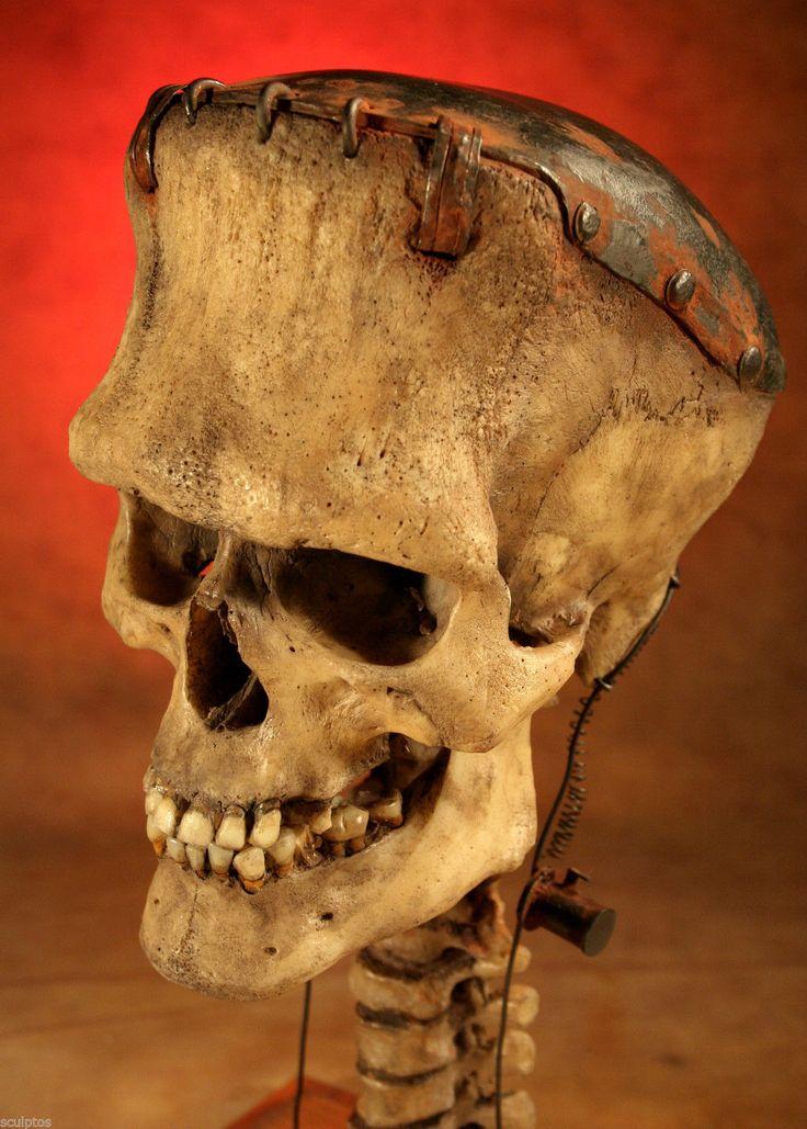 Frankenstein Life Size Human Skull Real Kuebler Sideshow Gaff Oddity Tattoo Art | eBay