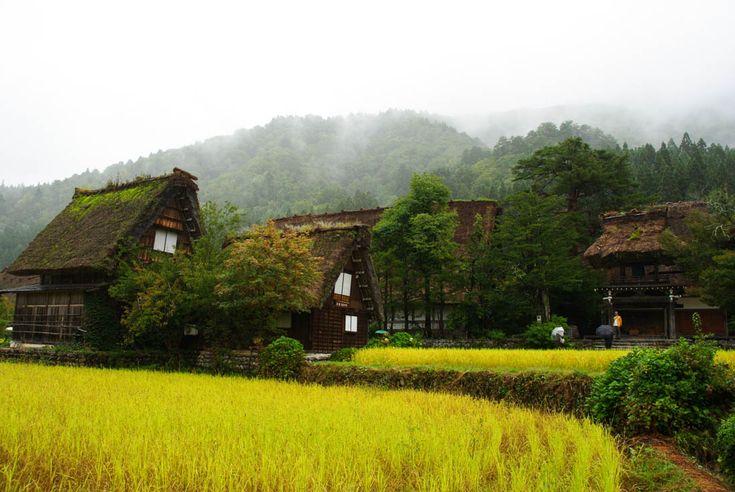 rizière dans le village de shirakawa-go