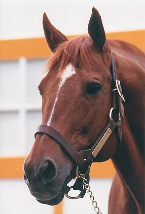 Secretariat. Perhaps the greatest race horse ever to hit the track. And a smart one. William Nack said he saw Secretariat watch a plane cross the sky one day. The great ones are usually very smart.