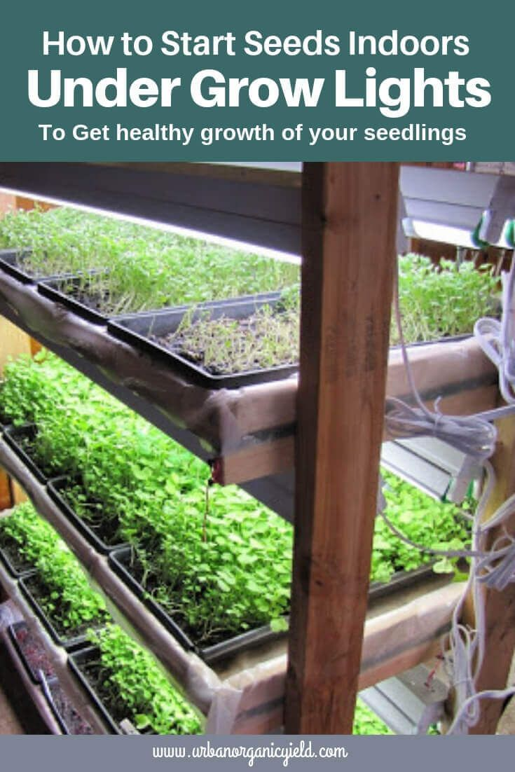 6 Best Grow Lights For Seedlings 2019 Reviews Buying Guide