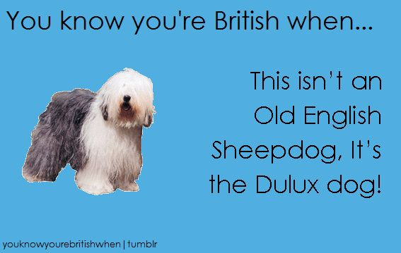 You Know You're British When... - Tap the pin for the most adorable pawtastic fur baby apparel! You'll love the dog clothes and cat clothes! <3