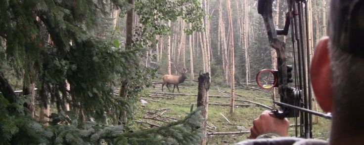 Elk101.com | Dedicated to Elk Hunting Information, Archery Elk Hunting | Elk Hunting Videos | Elk Hunting Forum
