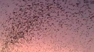 Wonderful Birds Flying - Its Look A Like Special Effects Video, via YouTube.