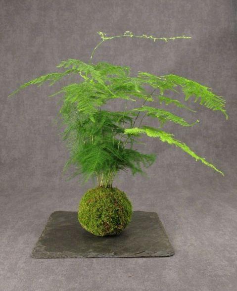 Les kokedamas : les plantes à suspendre. - The kokedamas : plants hanging.
