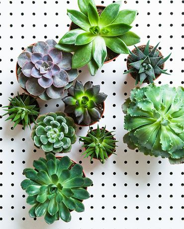 succulents are a must.