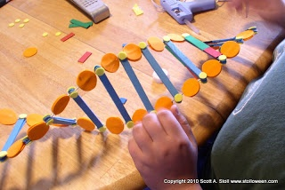 Scotty ART: The DNA Model Project