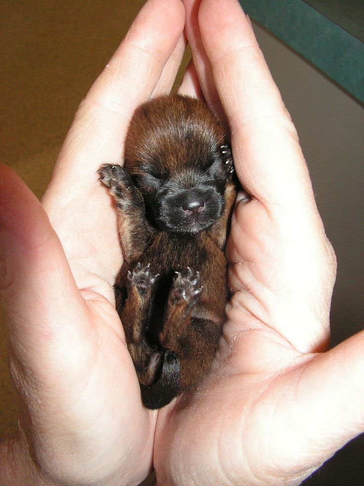 guys this is new born puppy -Please check the website for more pics