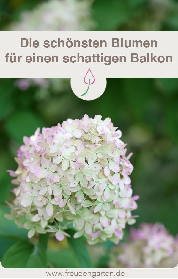 Blumen für einen schattigen Balkon GEMEINSAM IM GARTEN Pinterest - garten blumen gestaltung