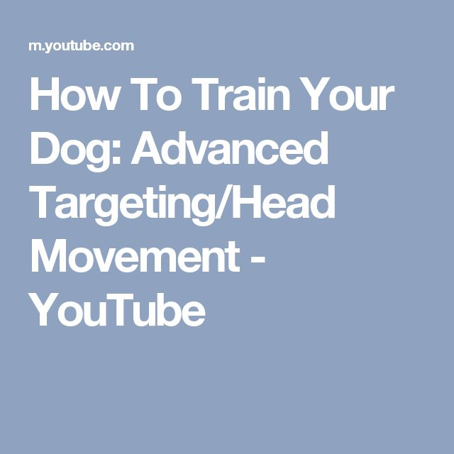 How To Train Your Dog: Advanced Targeting/Head Movement - YouTube