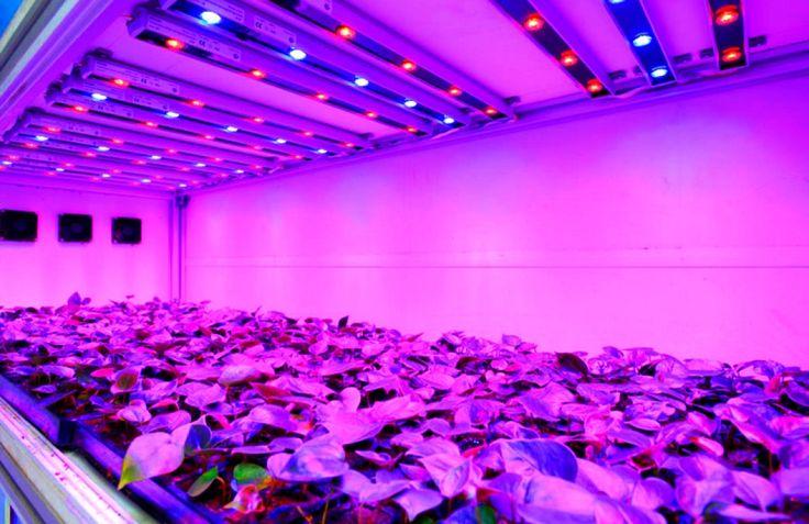 Conoce los diferentes sistemas de iluminación para tu cultivo de interior: HPS, LED, y LEP - http://growlandia.com/marihuana/conoce-los-diferentes-sistemas-de-iluminacion-para-tu-cultivo-de-interior-hps-led-y-lep/