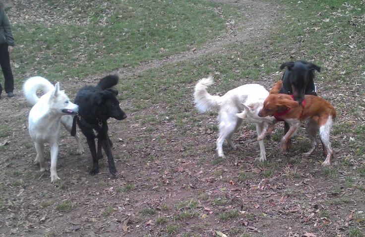 20/11/2016 - Torino con Duke, Peja, Emi e Laika