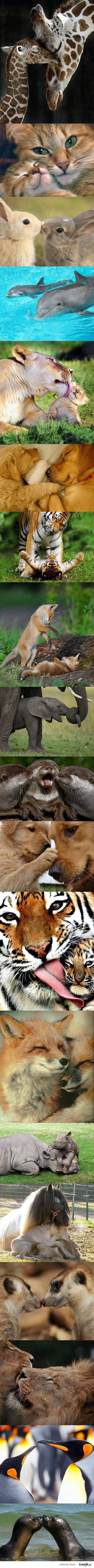 Cute Animal Moments, I love the tiger kiss :)