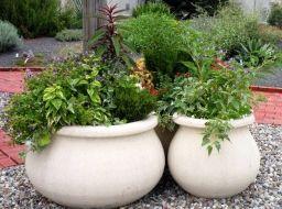 Лучшие контейнерные растения - Садоводка
