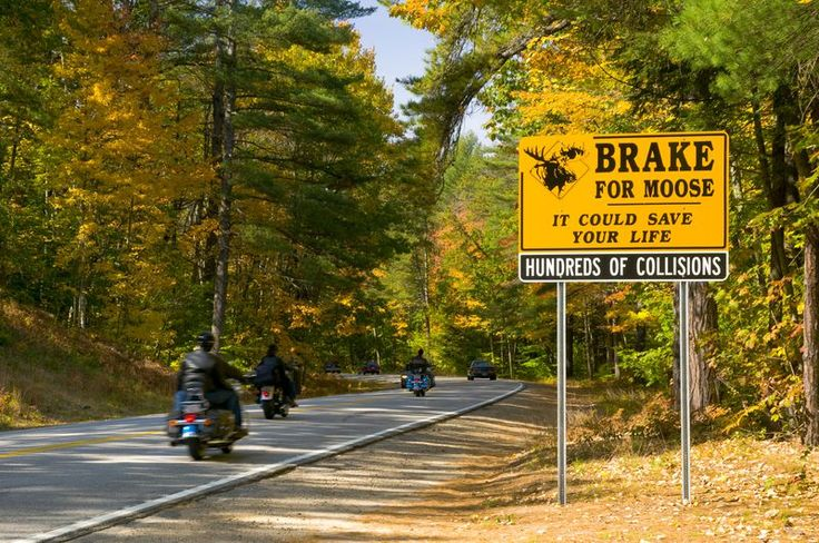 The tree-lined, high-climbing Kancamagus Highway is New Hampshire's undisputed champion fall foliage drive.