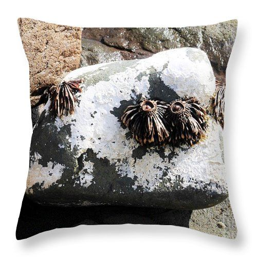 Sea Life - Fishers Point Throw Pillow by Lexa Harpell. #seaweed #dried #bullkelp #rocks #water #throwpillow #fisherspointtasmania #sealife #seascape #homedecor #summerdecor #sealifedecor