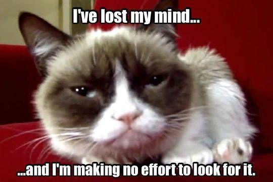 LOL I'm with ya Grumpy Cat!!!!