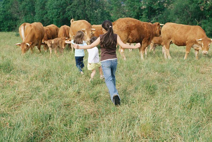 Op belevenisboerderij Gut Vögeihof in #Karinthië, #Oostenrijk, ervaren jij en je kinderen hoe het leven op een boerderij is en wat de verzorging van (kleine) dieren inhoudt! De kinderen worden volop betrokken bij diverse activiteiten in en om de boerderij, zoals de dieren leren voederen en de koeien melken. #boerderijvakanties