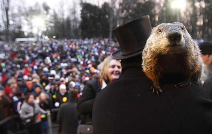 Groundhog co-handler Ron PLOUCHA holds PUNXSUTAWNEY PHIL in front of a record crowd estimated at 35,000 after PHIL's annual weather PREDICTION on Gobbler's Knob in PUNXSUTAWNEY, PENNSYLVANIA on February 2, 2013.