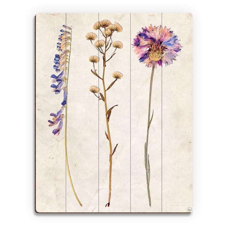 77 besten Pressed Flower Ideas Bilder auf Pinterest | Blumen pressen ...