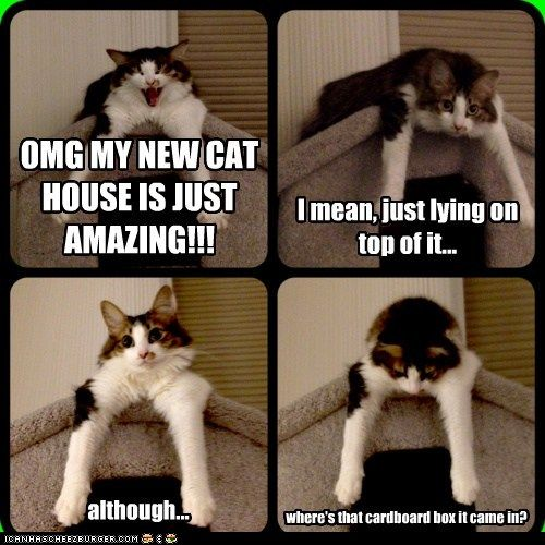 Google Image Result for http://www.fbclick.com/wp-content/plugins/wp-o-matic/cache/37c9f_funny-cat-pictures-lolcats-omg-my-new-cat-house-is-just-amazing.jpg
