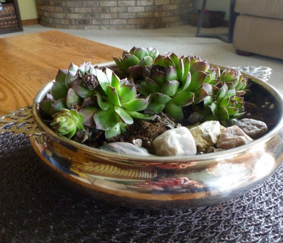 Indoor plants. Succulents. Ahhhh haaa!! That is y my succulents died!! Repotting them this weekend!!