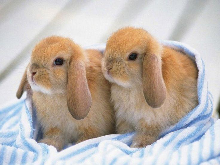 Cómo cuidar a conejos recién nacidos | Mascotas