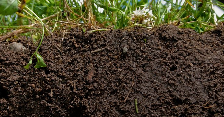 The solution to climate change lives in the integrity of the soil at our feet