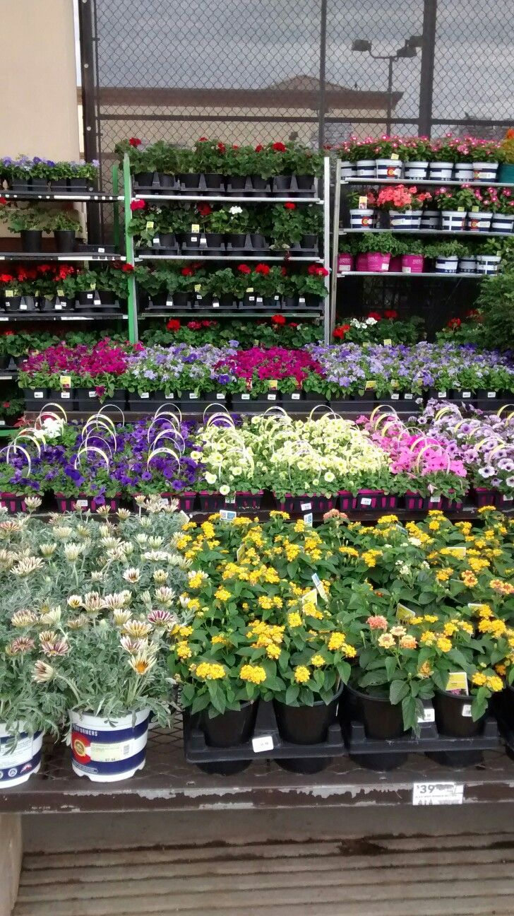 1000  images about garden retail displays on pinterest