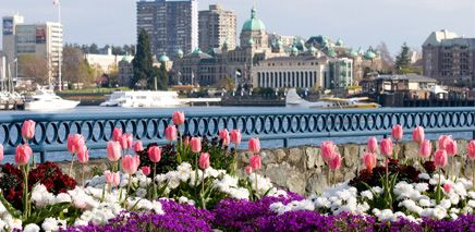 We made it! Well, almost. It's time to get ready for spring—even if (for now) we do it from the warmth and comfort of home. Here's our guide to getting the most out of March in Victoria.
