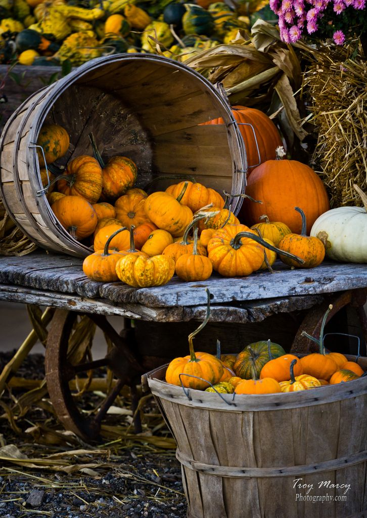 Fall Pumpkins, Rader Farm in Bloomington, IL | Troy Marcy, flickr