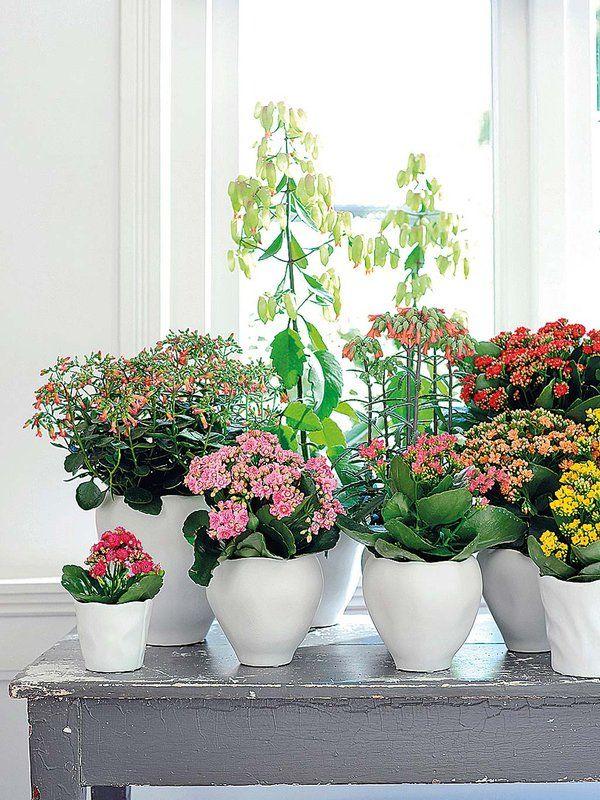 59 best images about plantas y flores on pinterest for Caseta jardin ikea