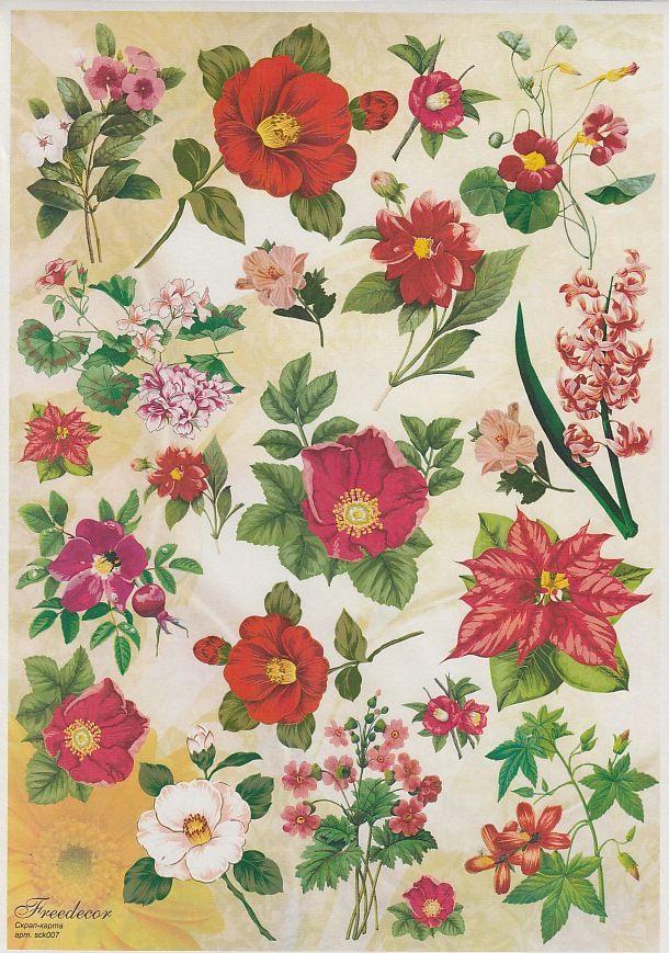 него картинки цветы а4 для печати ощущение