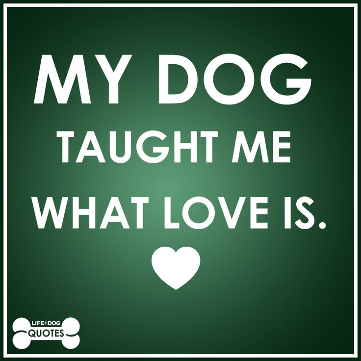 My Dog Loves Me Quotes: 291 Best Images About Dog Quotes & Sentiments On Pinterest