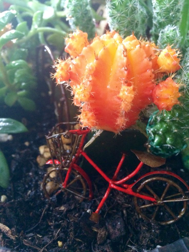 Home flower garden - Fairy Garden Bicycle And Cactus Flowers Pinterest