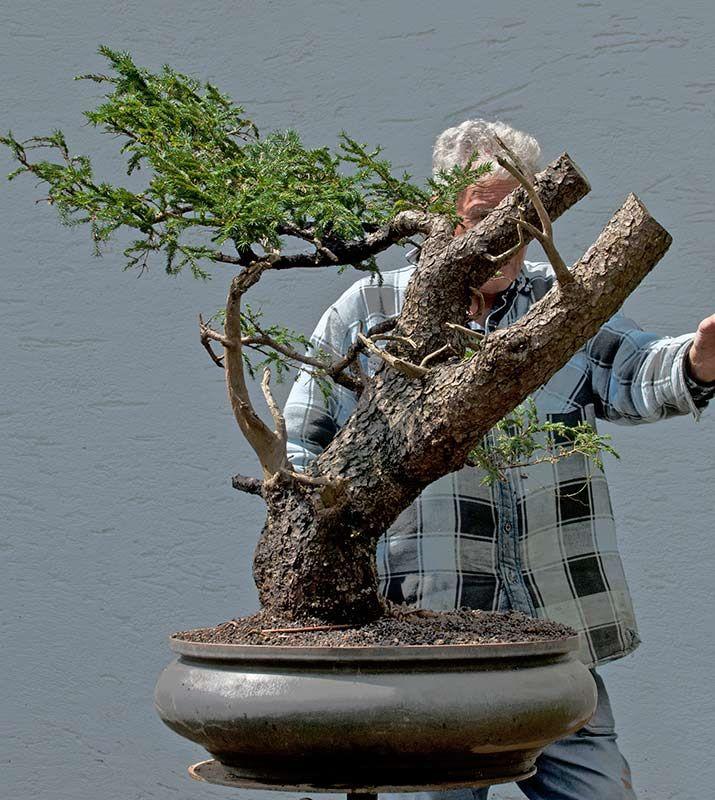 206 besten walter pall bonsai bilder auf pinterest. Black Bedroom Furniture Sets. Home Design Ideas