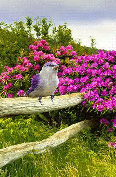 oiseau barrière fleurs roses