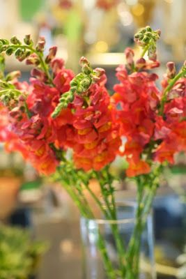 Snapdragons, coral/orange - great flowers available all year round