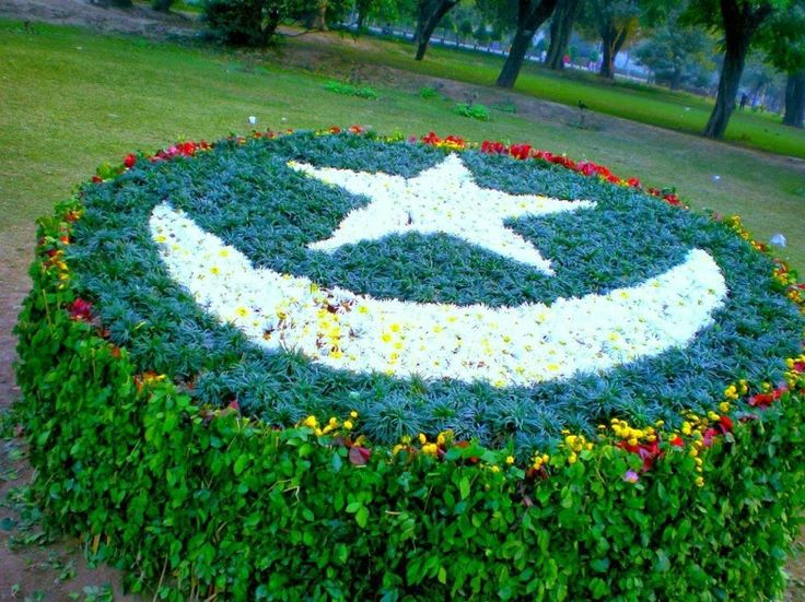 essay on national flower of pakistan The national flower of pakistan is jasmine is a popular flower whose meaning is  often associated with love and romance its flamboyant white.