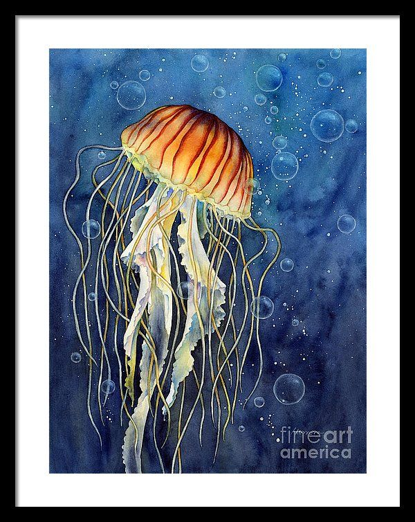Jellyfish Framed Print Featuring The Painting Jellyfish By Hailey E Herrera Jellyfish Painting Jellyfish Art Jellyfish Illustration