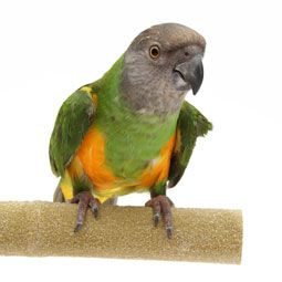 Is your pet bird stressed? Help your bird destress with these tips.