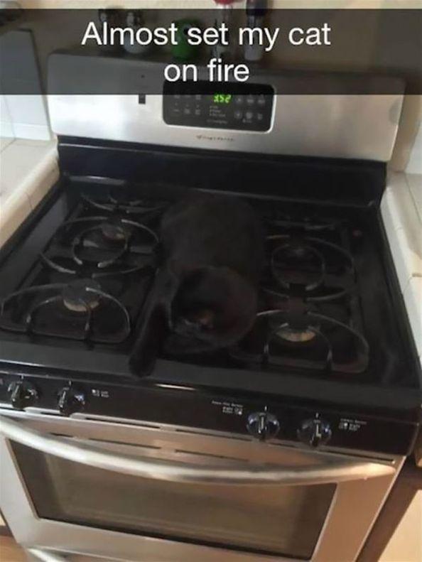 30  Funny Snapchat Cats