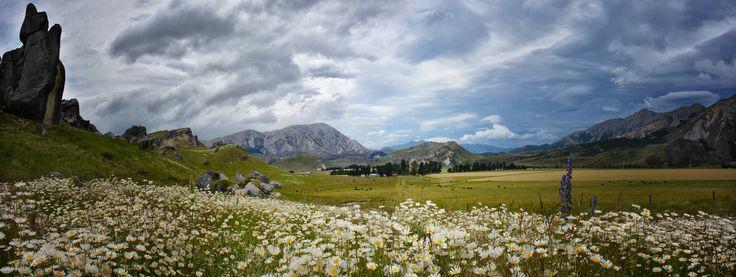 Castle Rock Wild Flowers by Linda Cutche on 500px
